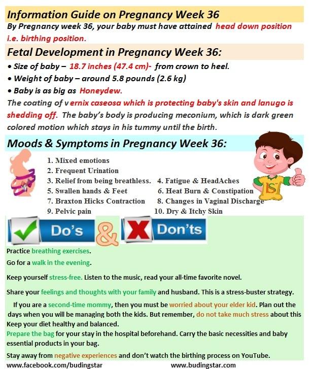 pregnancy-week-36-budding-star