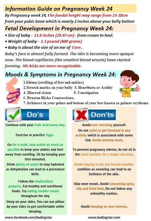 pregnancy-week-24-budding-star