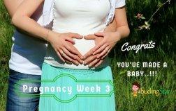 pregnancy-week-3
